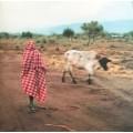 Stalawa - Stalawa In East Africa